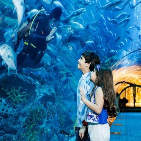 Dubai Aquarium & Underwater Zoo Tickets | KitMyTrip