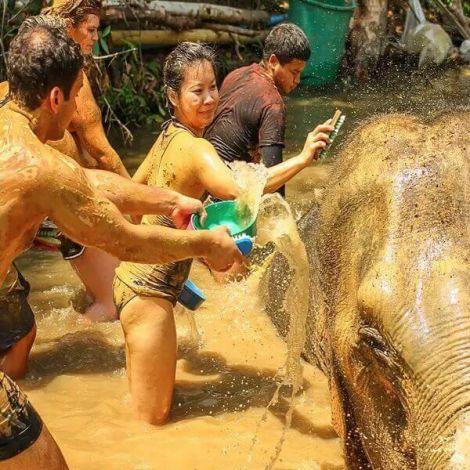 Elephant Jungle Sanctuary Phuket Half Day Visit | BookMyExperiences
