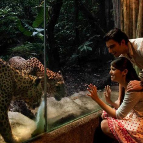 Night Safari Singapore   Online Tour Packages   KitMyTrip