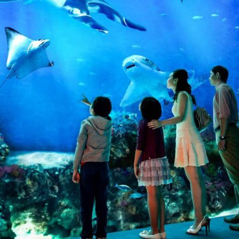Sentosa S.E.A. Aquarium™   Book Tickets   KitMyTrip